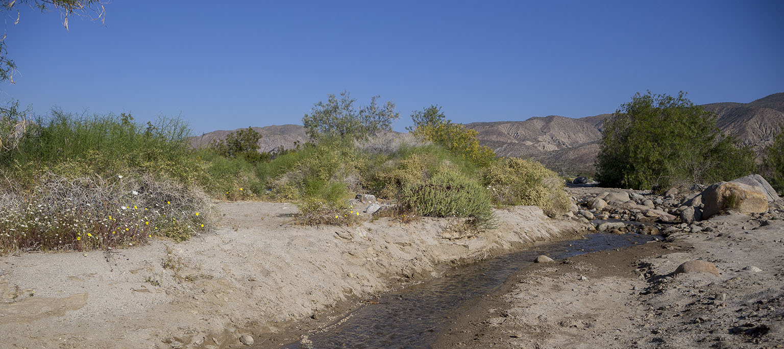 The creek next to our site in Coyote Canyon