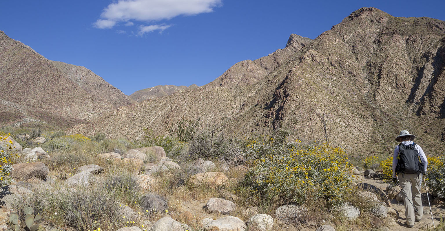 Waling up Palm Canyon.