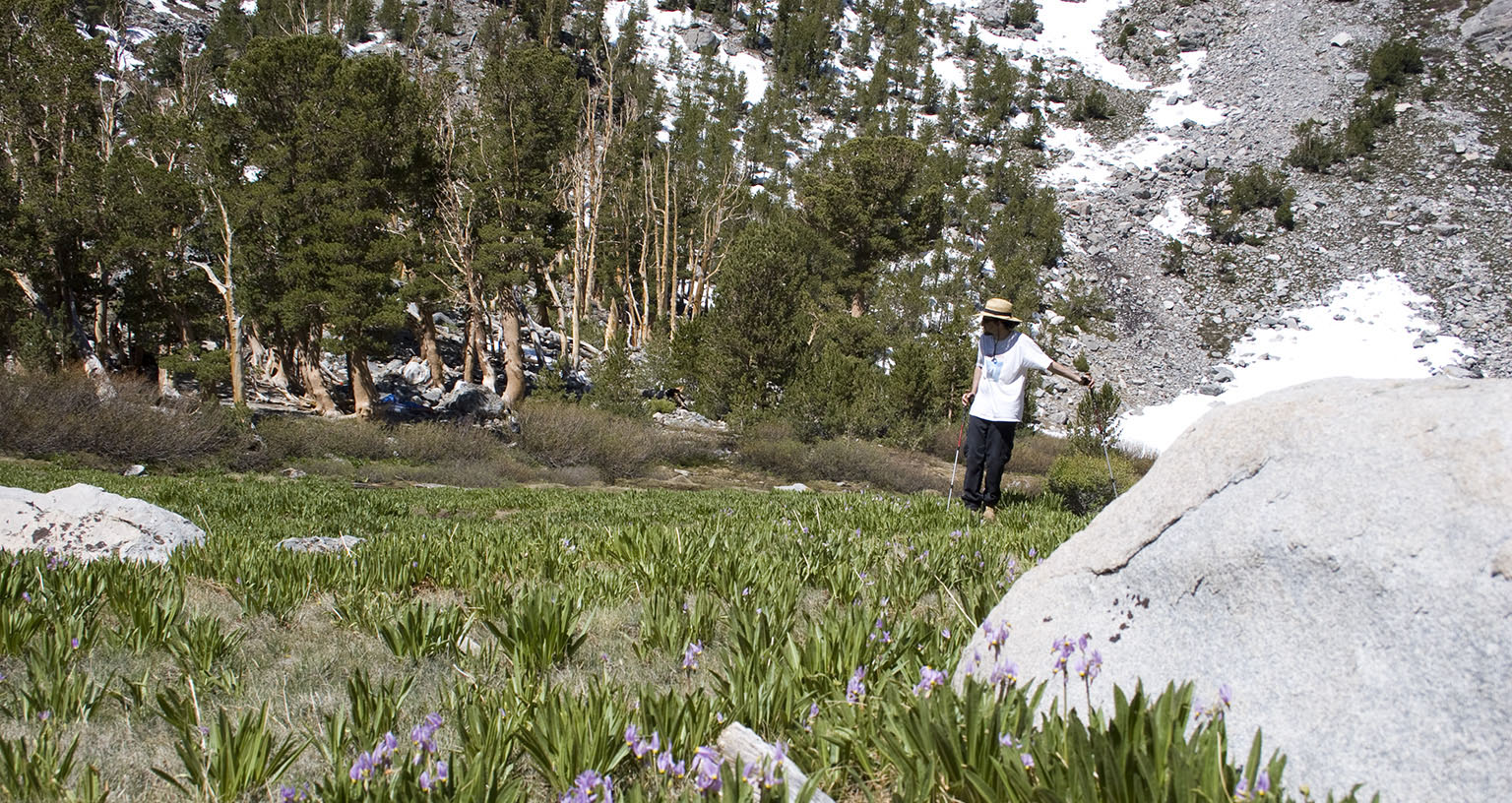Golden Trout Meadows, wildflowers, and our tent in the background