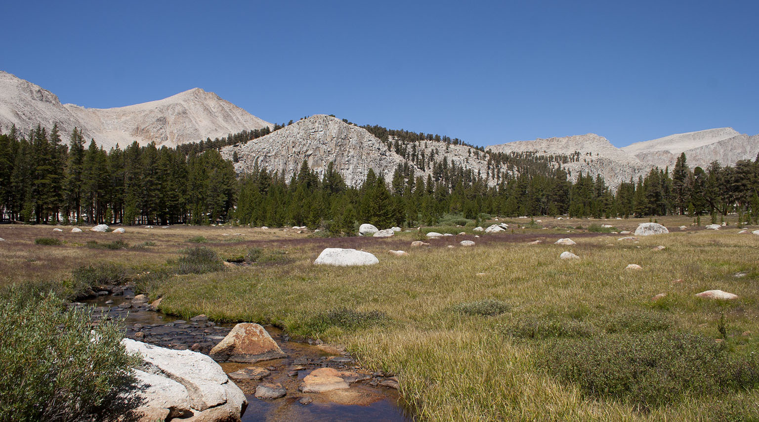 Meadow in Cold Creek drainage